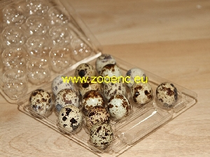 photo Japanese Quail (egg type), egg